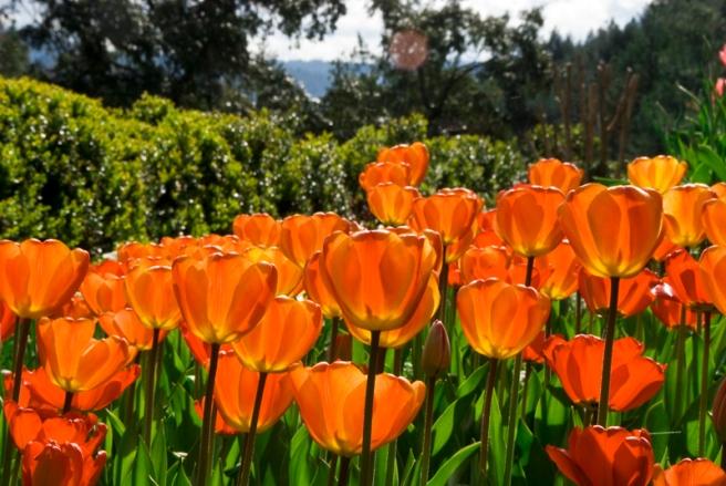 4-17-2011-hermitage-gardens-7.jpg