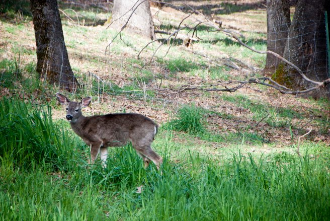 2-11-2015 Deer (1)