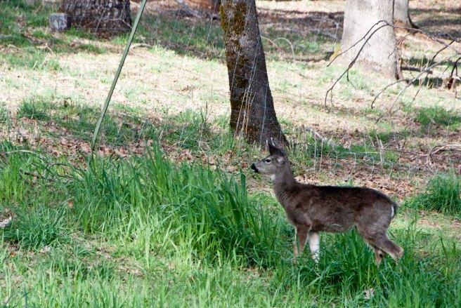2-11-2015 Deer (2)