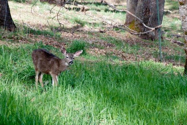 2-11-2015 Deer (3)