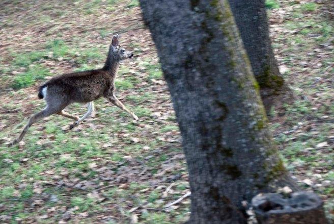 2-11-2015 Deer (4)
